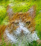 An Orange Cat 2