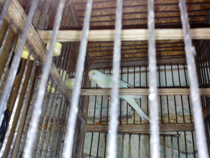 Vogel im Káfig