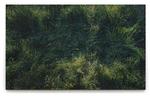 Großes Gras