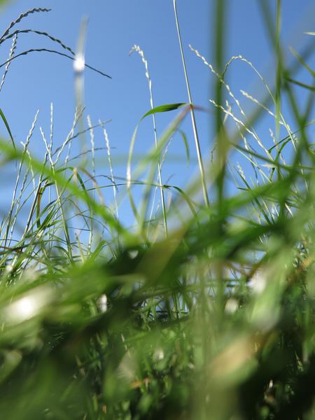 Im Gras 2 (3er-Serie)