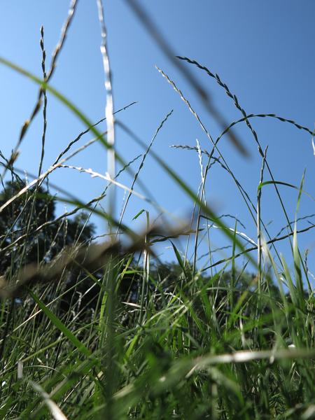Im Gras 1 (3er-Serie)