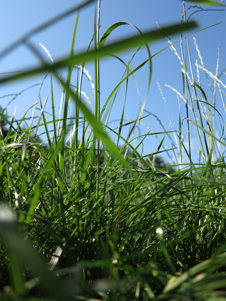 Im Gras 3 (3er-Serie)