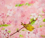 The Japanese White Eyes in the Sakura Sky (private collection)