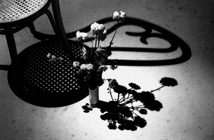 A Chair with Flowers