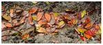 Hojas ( Leaves)