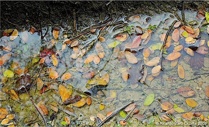 Hojas-2-(Leaves)