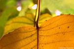 Hojas-3-(Leaves)