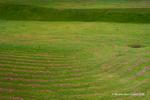Campo de Grama ( Field of grass)