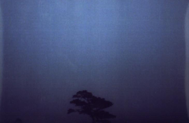 the irish tree