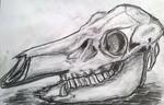 pig's skull