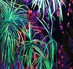 Painting in bright colors Phosphorescence Photography Ultraviole