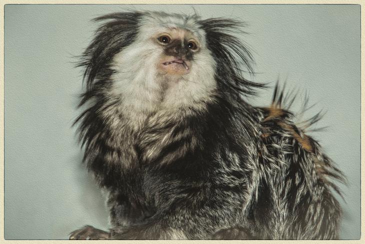 Prospect Park Monkey