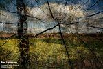 Soul_Landscape_SUN