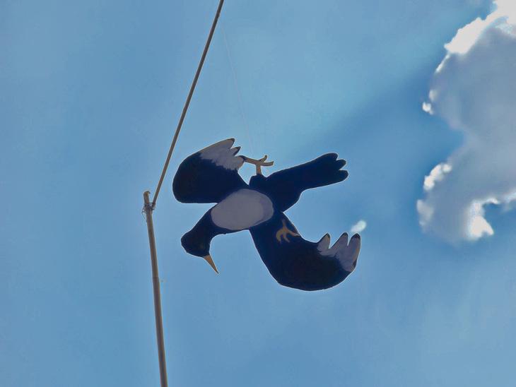 Magpie-Dummy
