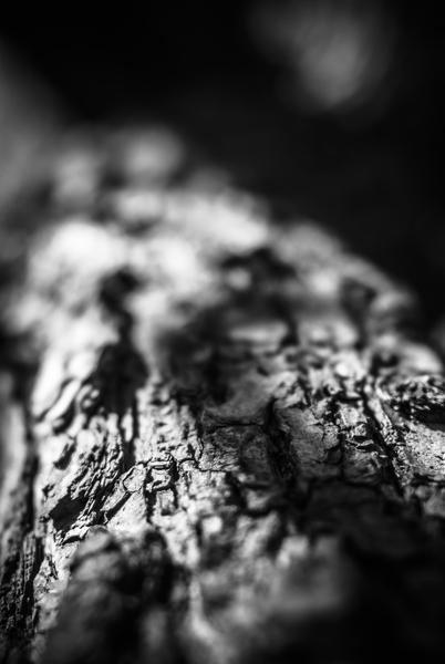 Tree par Jean-François Dupuis
