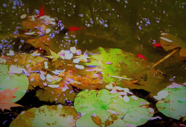 Autumnal Pond