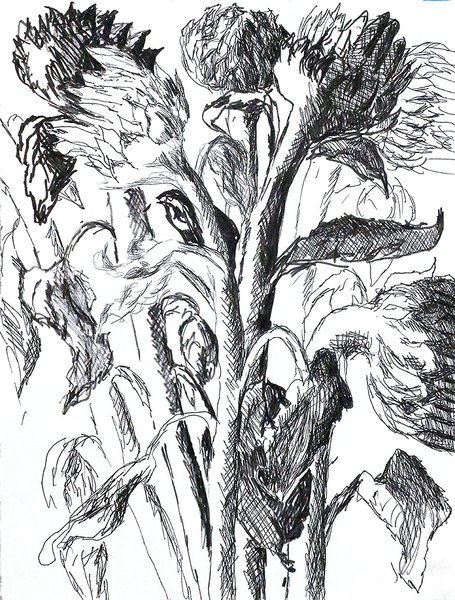 flowers drawings raphael perez flower drawing black  white ink