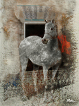 Horse from Córdoba