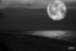 """""""In the soft light of the moon"""""""