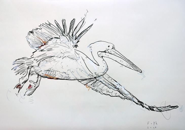 Pelikan I