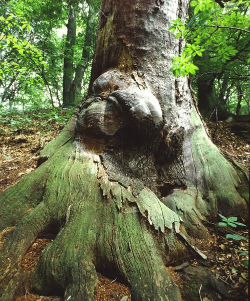 TREE WESERBERGLAND 2
