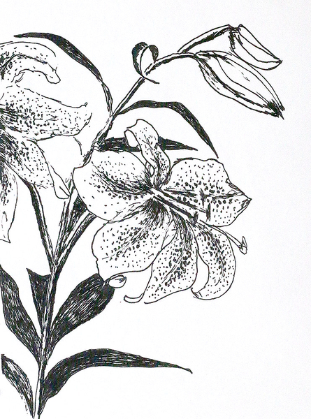 flowers drawings flower drawing dibujos  de flores   paintings