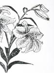 flowers drawings flower drawing dibujos  de flores   paintings