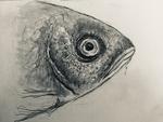 Fish dr1
