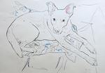 Pablo der Atelierhund II