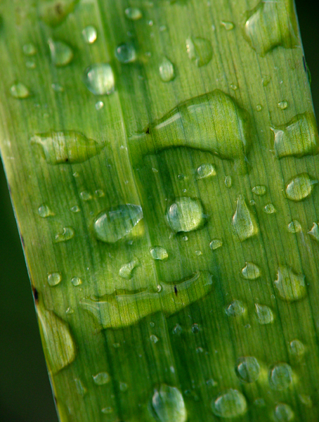 DROPS ARE WATCHING YOU