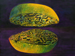 saihuites plant code; Acryl, canvas, 65x80cm, 2017