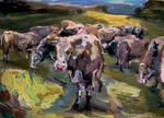 Kühe im Hochland