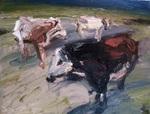 Kühe am Abend