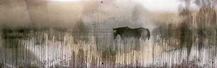 Pasture Survey- Horse