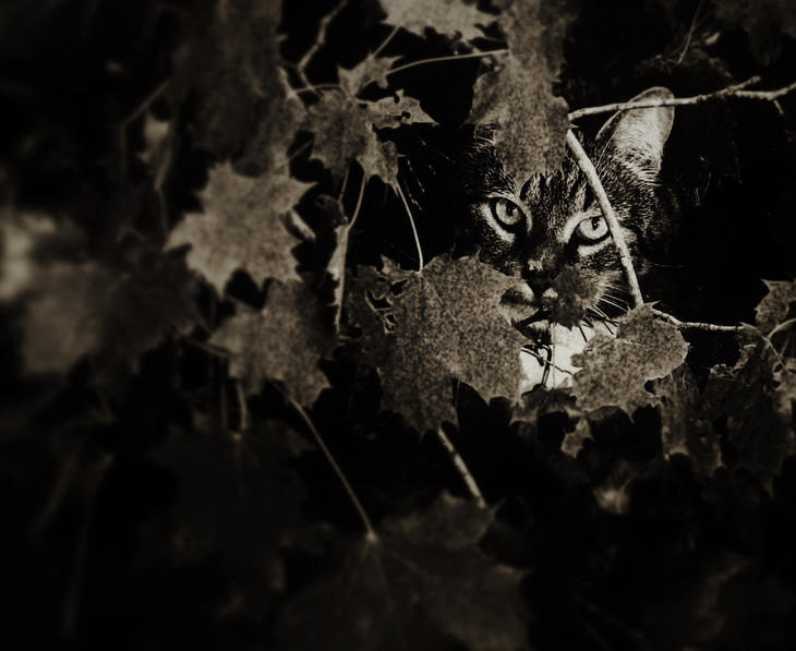 Cat in the Wood