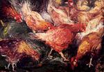 Pickende Hühner