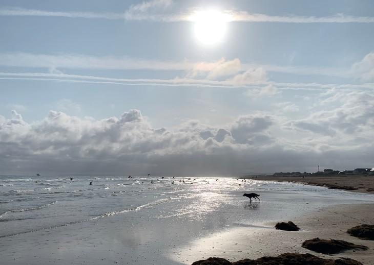 dog and seagulls