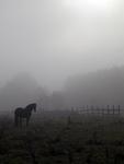 pferde nebel2