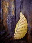 Leaf story