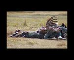 horse squeletor