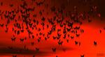 Swarm gently