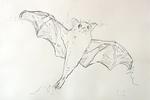 Fledermaus im Flug, die Beine streckend