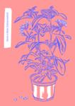 Stevia in Blüte