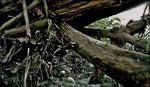 Weathered Debris 7