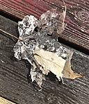 MacLeod-Leaf
