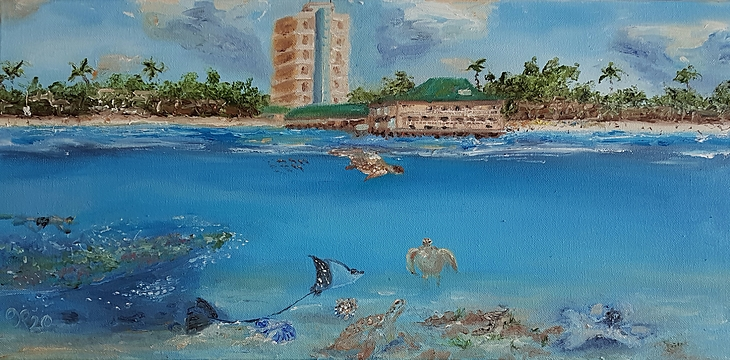 Turtles & Shipwrecks