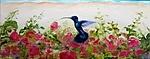 Hummingbird Caribbean