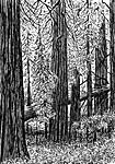 Jurassic_Forest