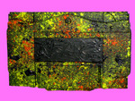 speckled frame and Blackness