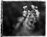 Still life  by Jean-Francois Dupuis